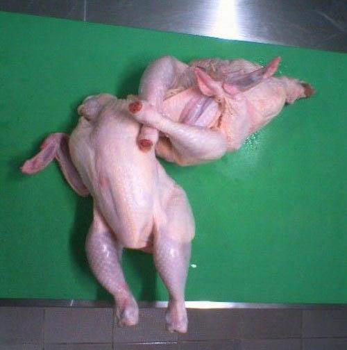 chicken wrestling fun تصاویری بامزه از تزئین مرغ ها